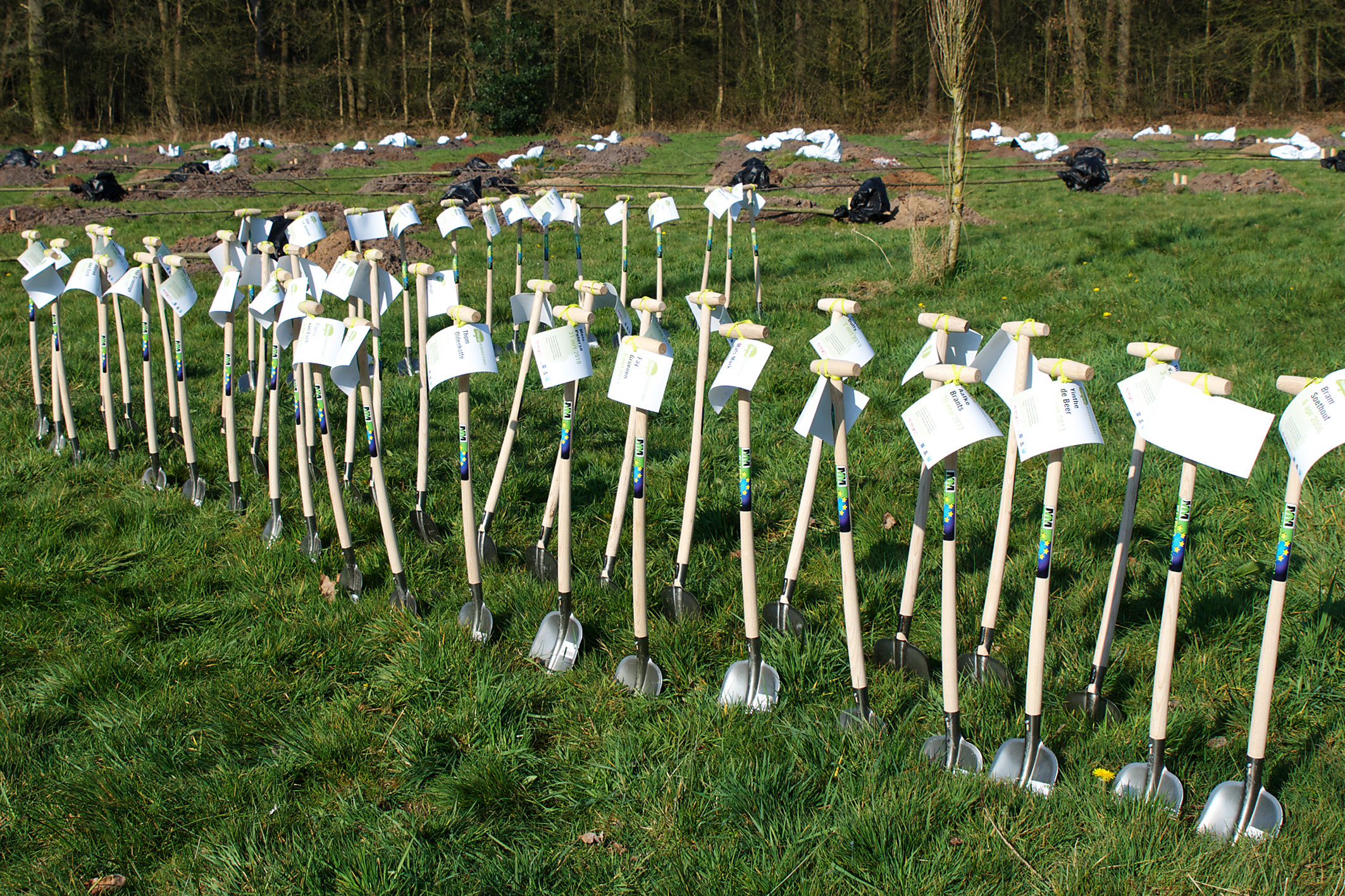 Geboorteboom Tilburg (schopjes) - Bomen