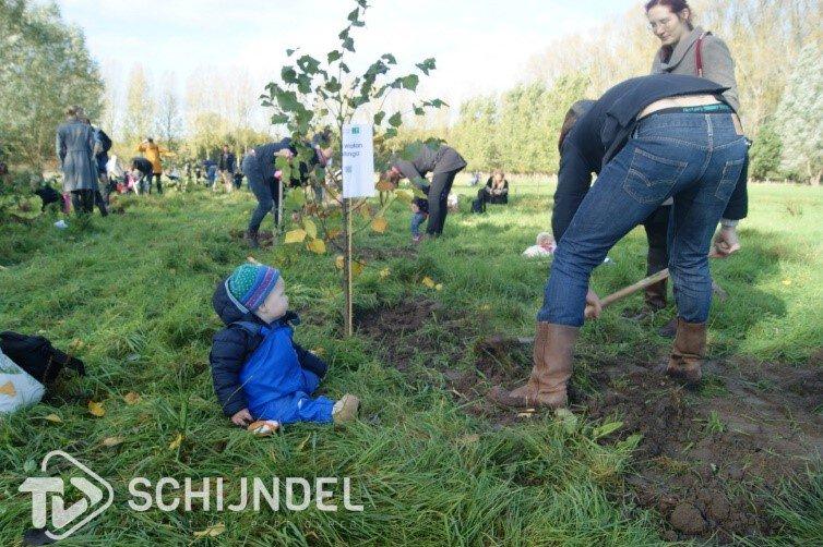 Geboorteboom Schijndel (planten) - Bomen