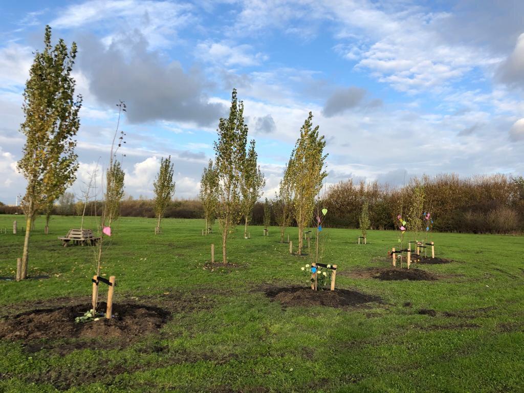 Levensboom NKBB (planten) - Bomen