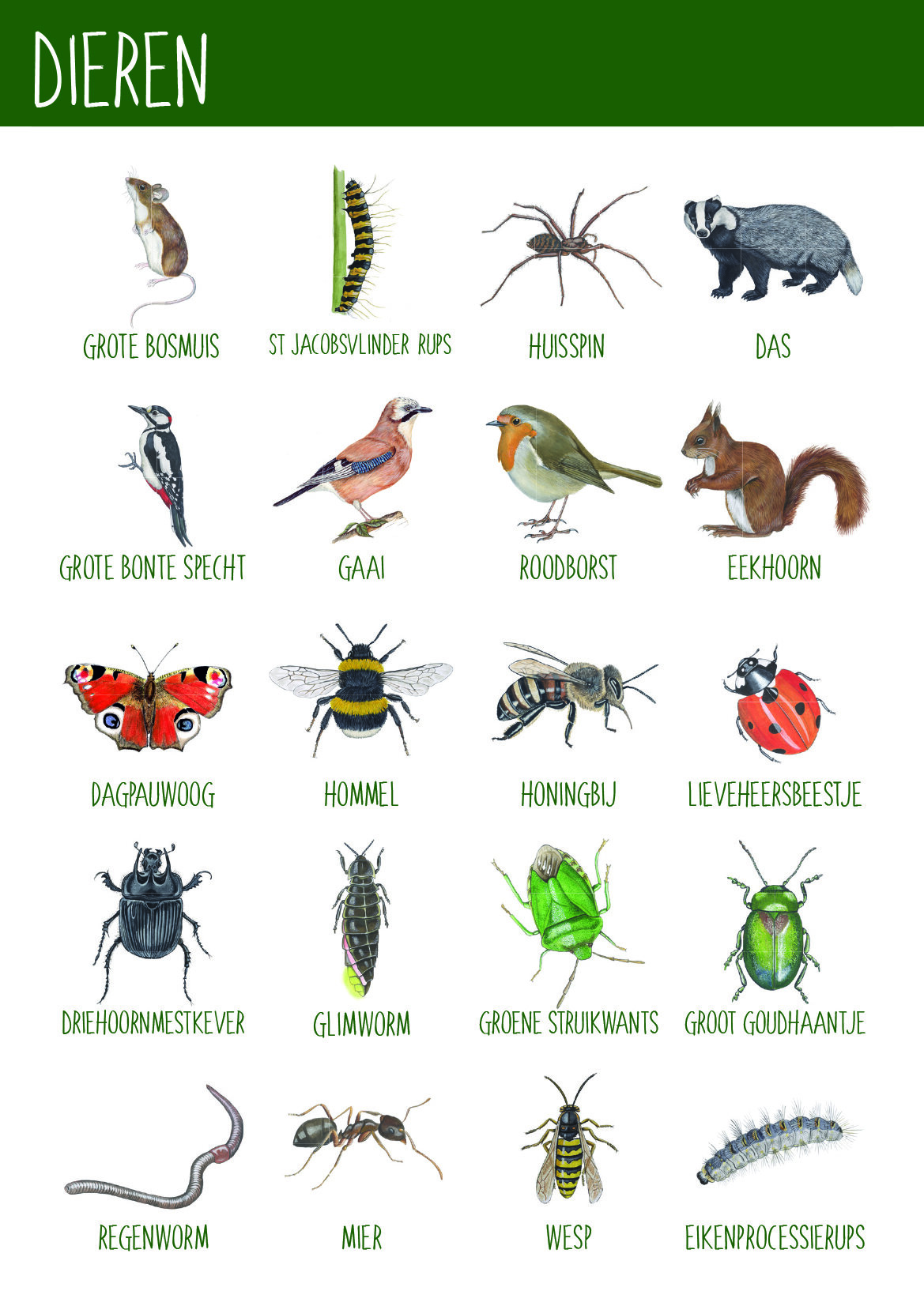Afbeelding dieren BomenPaspoort - Natuureducatie