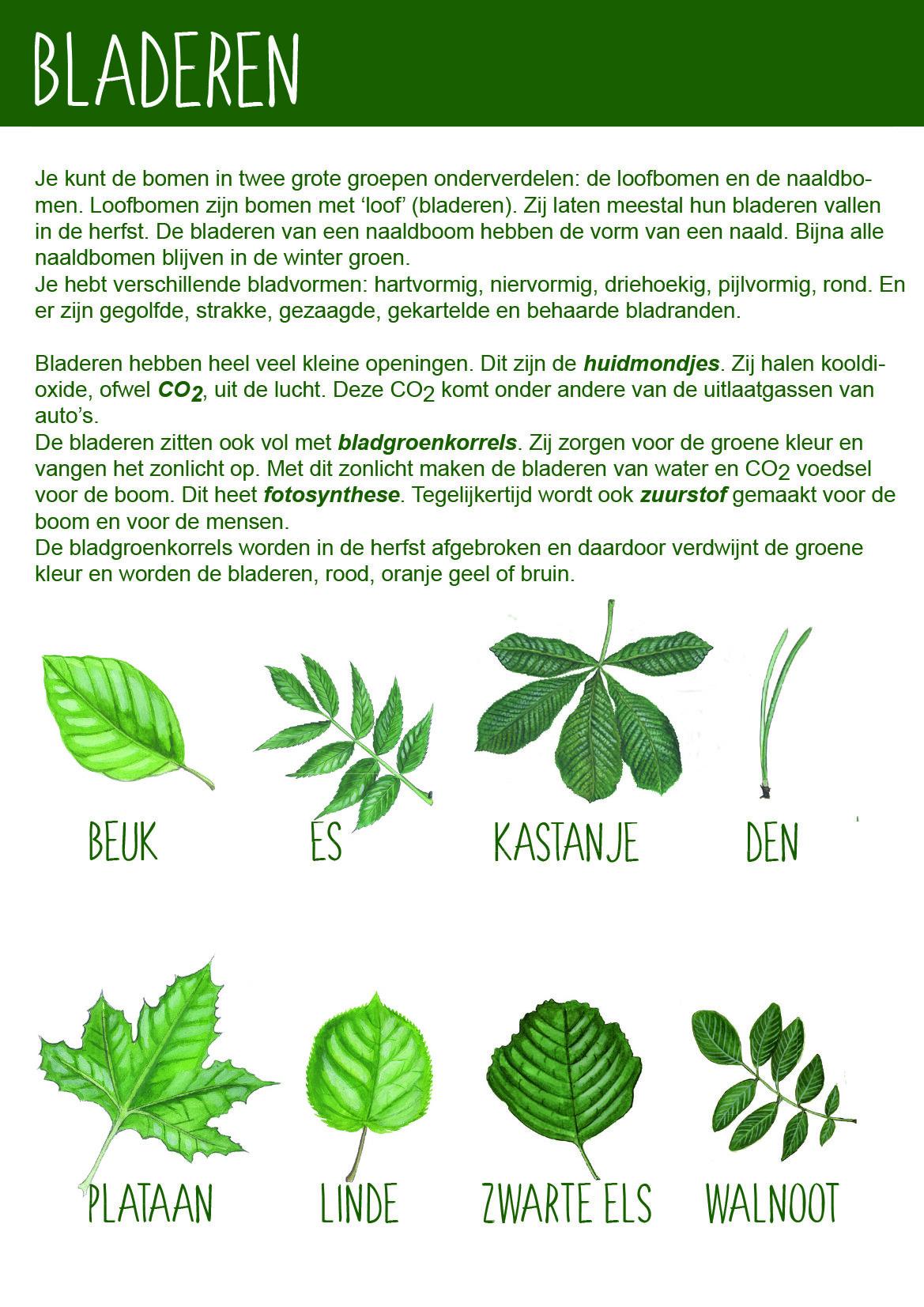Afbeelding bladeren BomenPaspoort - Natuureducatie
