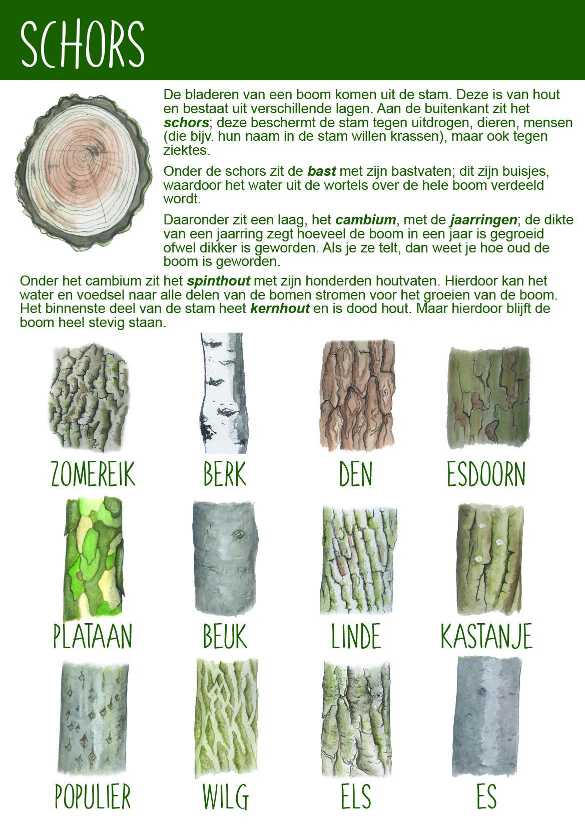 Afbeelding schors BomenPaspoort - Natuureducatie