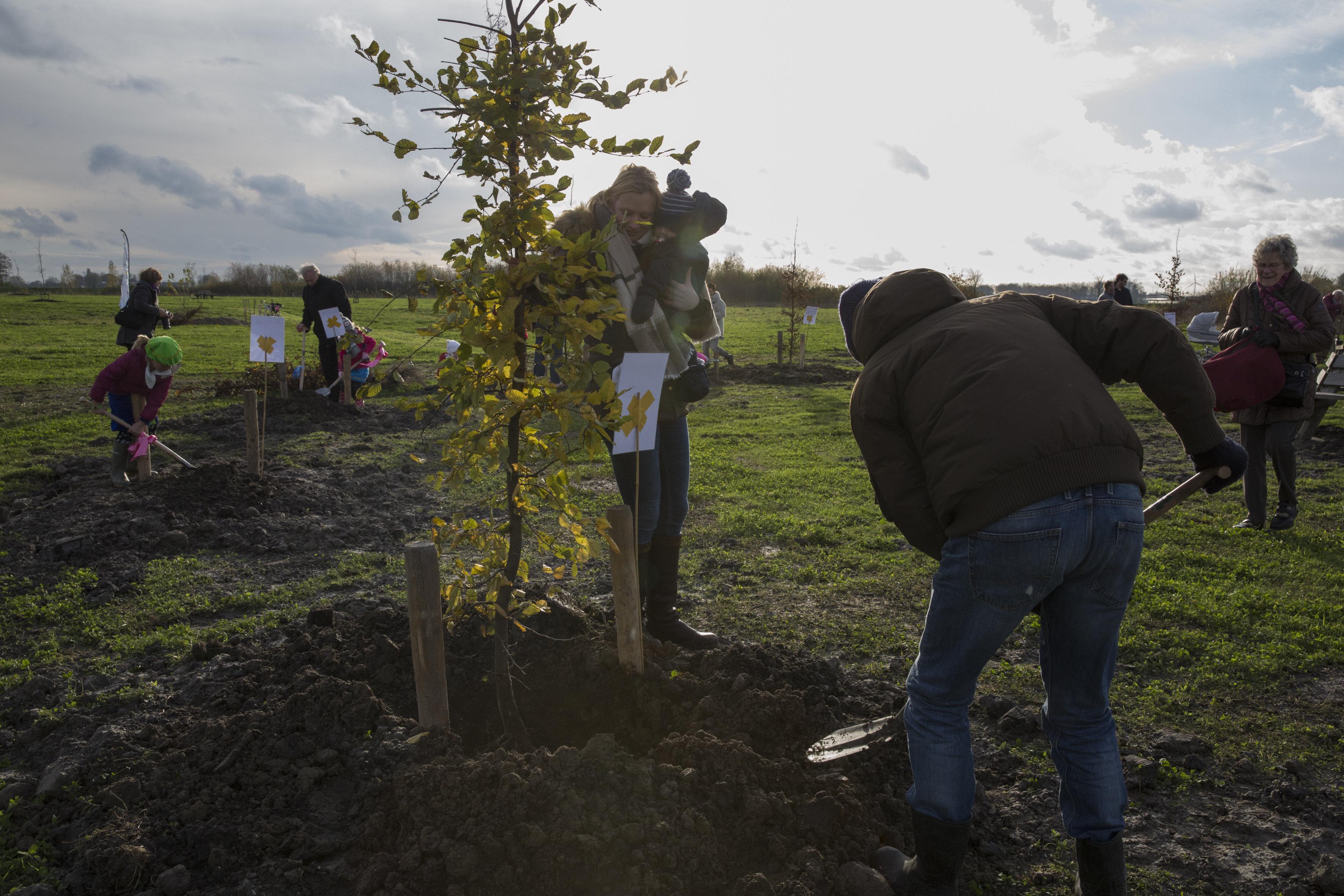 Geboorteboom NKBB (planten) - Bomen